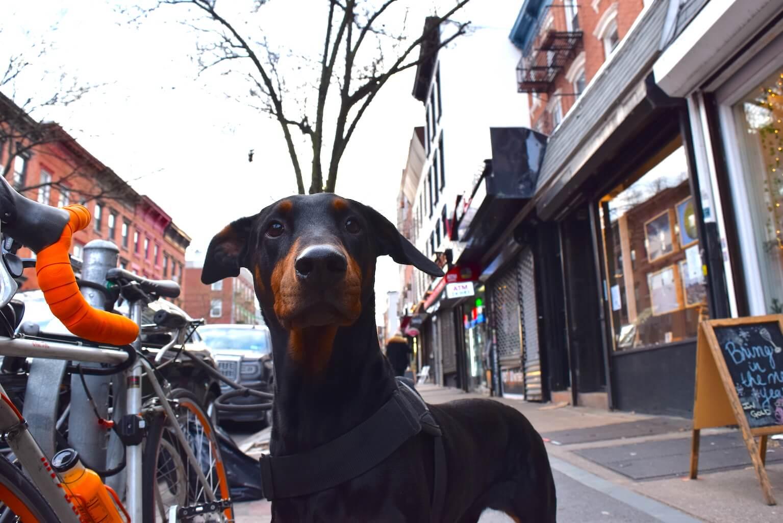 黒い犬とニューヨーク